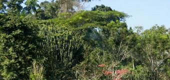 Angola defende protecção dos ecossistemas florestais