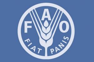 Logotipo da Organização das Nações Unidas para a Alimentação e a Agricultura (FAO)  Fotografia: Arquivos